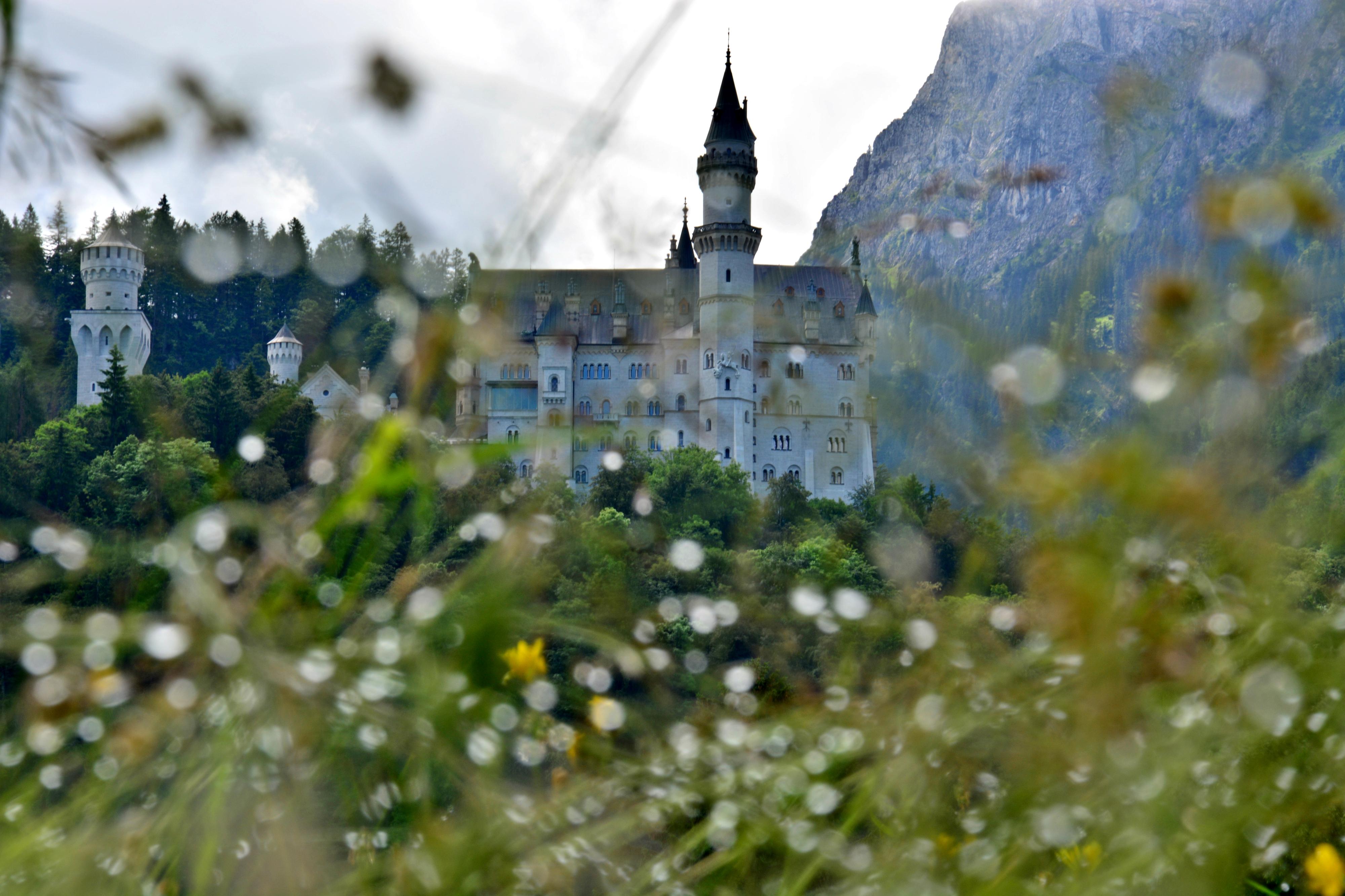 S0062 Morgentau am Schloss Neuschwanstein.jpg