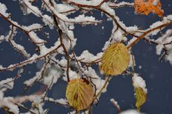 W0246 Herbst trifft Winter.jpg