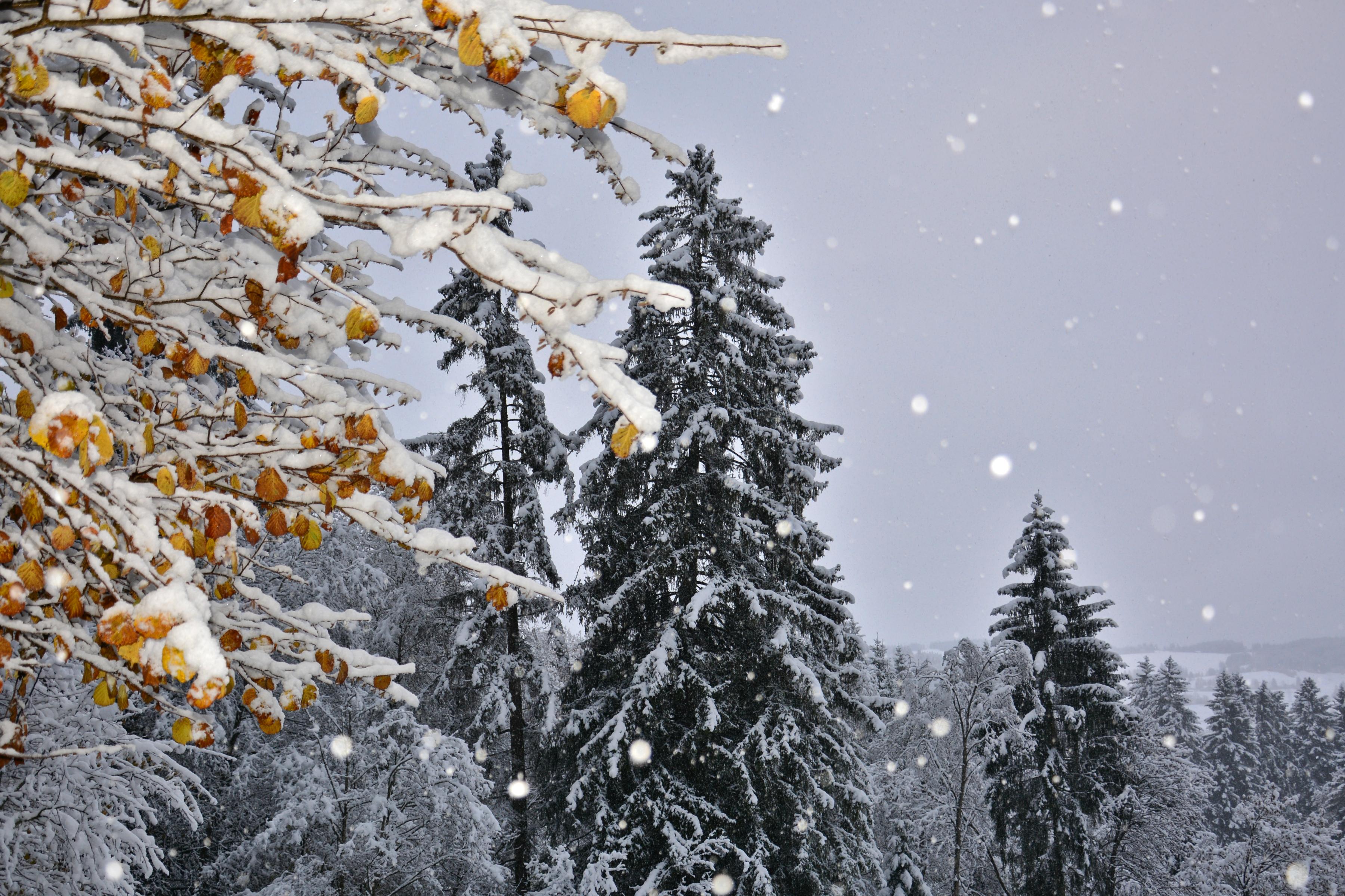 W0261 Schneeflocken am Edelsberg.jpg