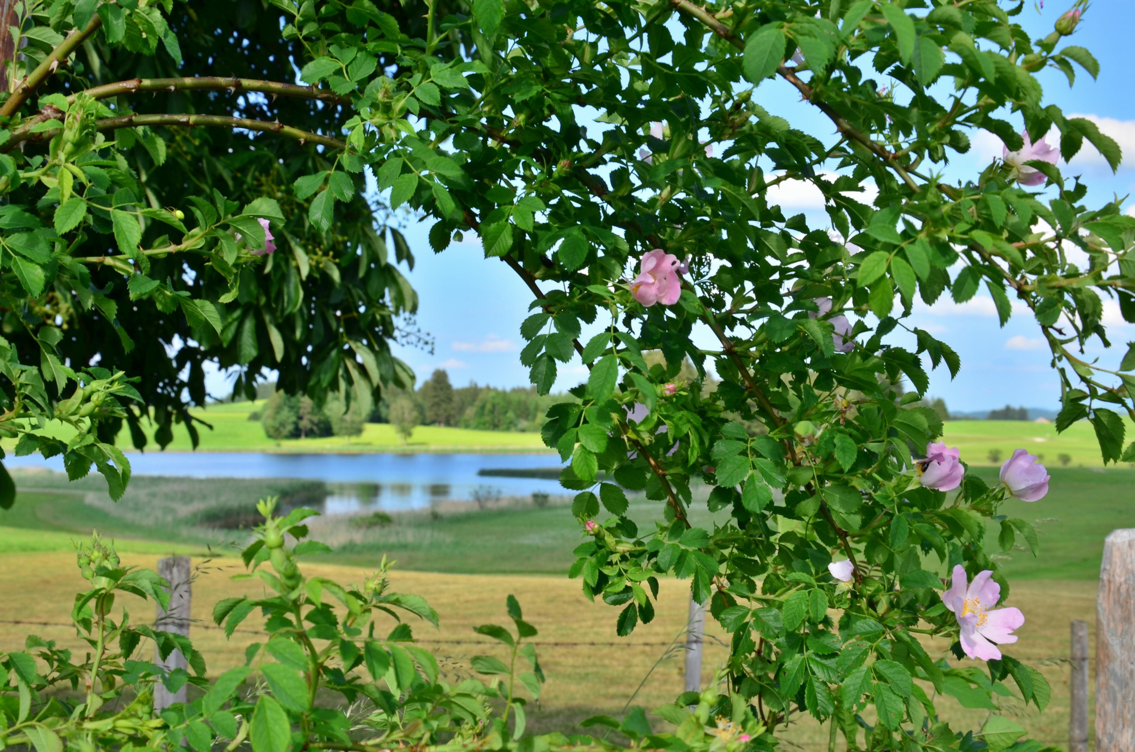 G0165 Durch die Blumen am Trollweiher.jpg