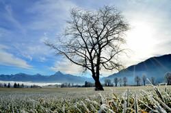 W0212 Frostmorgen in Weissensee.jpg