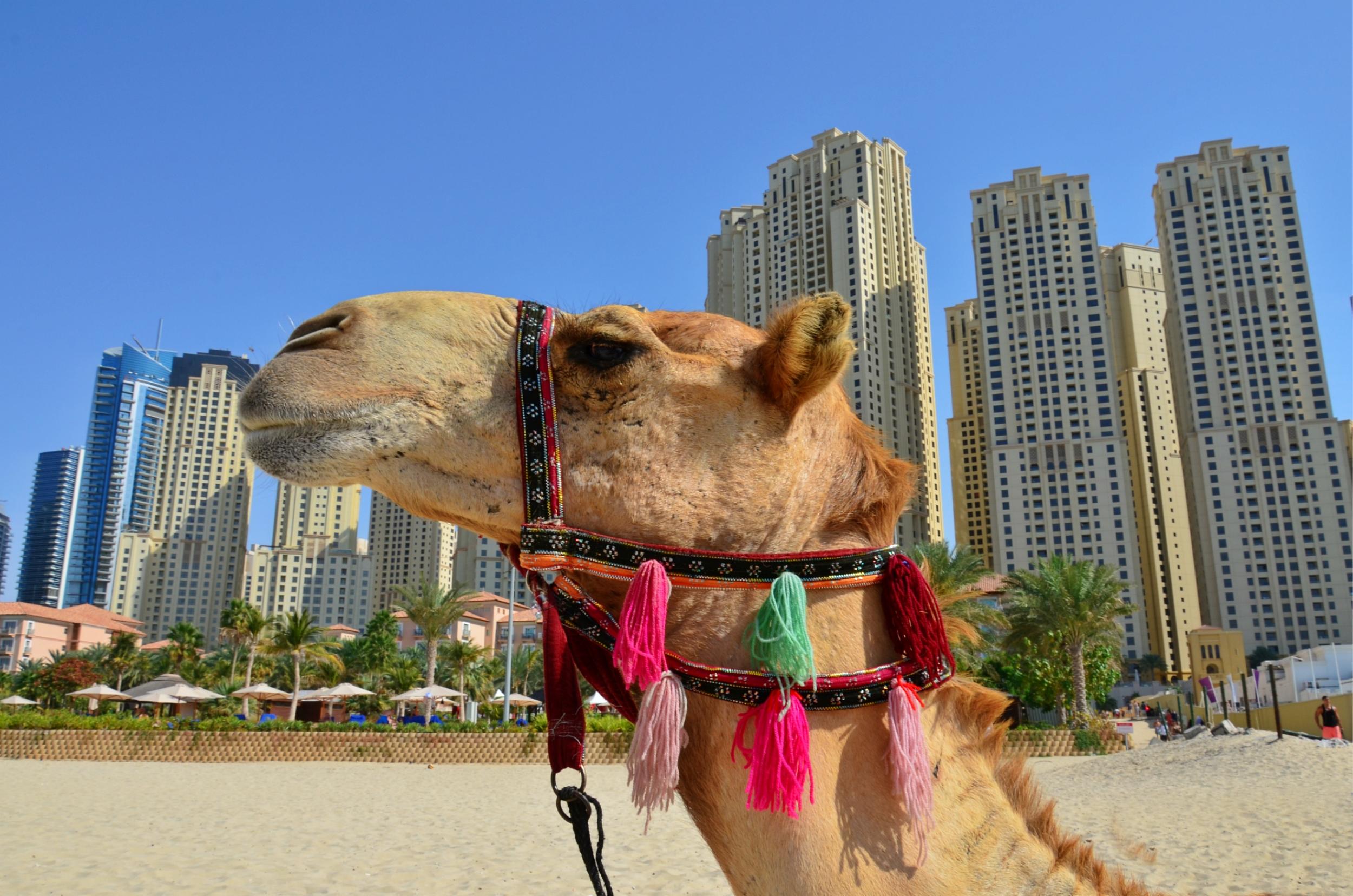 Dubai (32).jpg