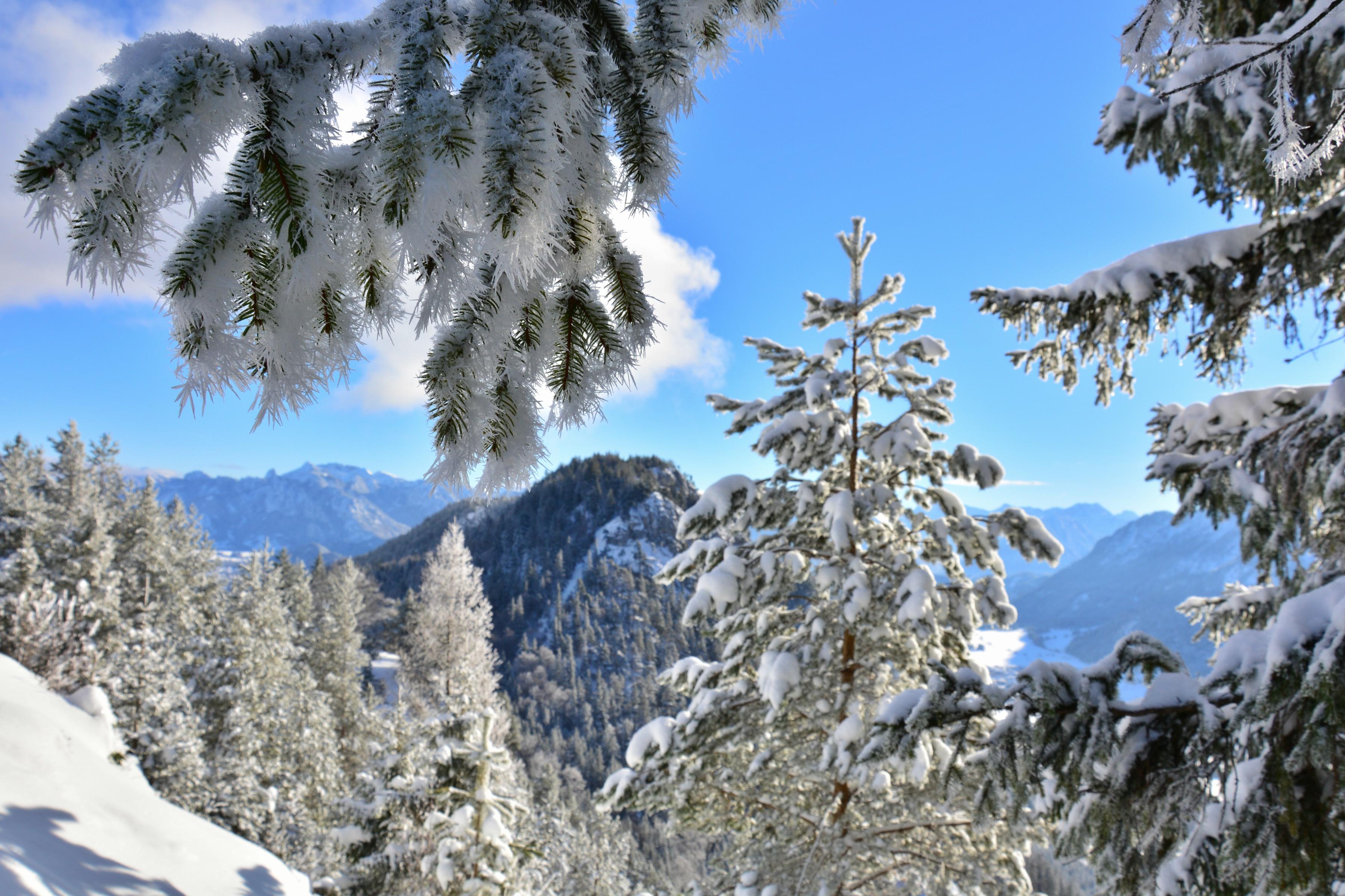 W0244 Frostzauber auf dem Falkenstein.jpg