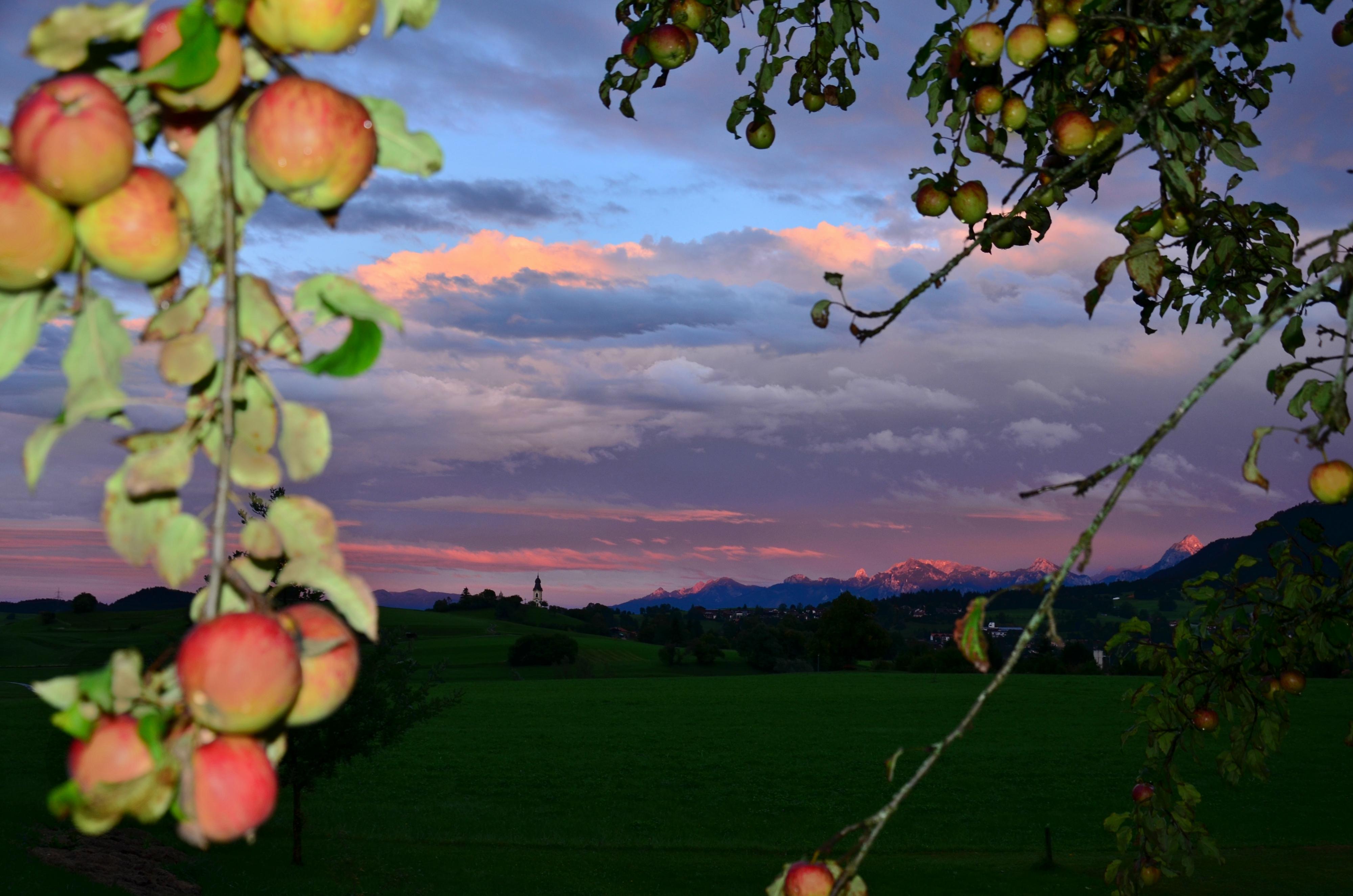 H0073 Abendrot unterm Apfelbaum Pfronten.jpg