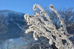 W0338 Schneeblumen vor dem Breitenberg.jpg