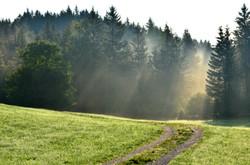 H0063 Nebelspiel am Waldrand.jpg