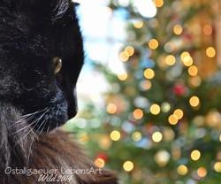 W0048 Weihnachtskater