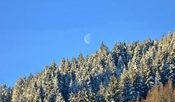 W0122_Winterbäume_mit_Mond.jpg