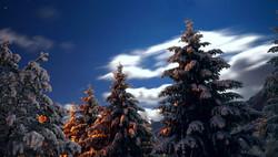 W0224_Winterbäume_im_Vollmond.jpg