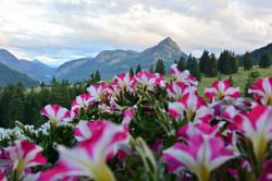 A0193_Blumengruß_von_der_Alpe_Bärenmoos.jpg