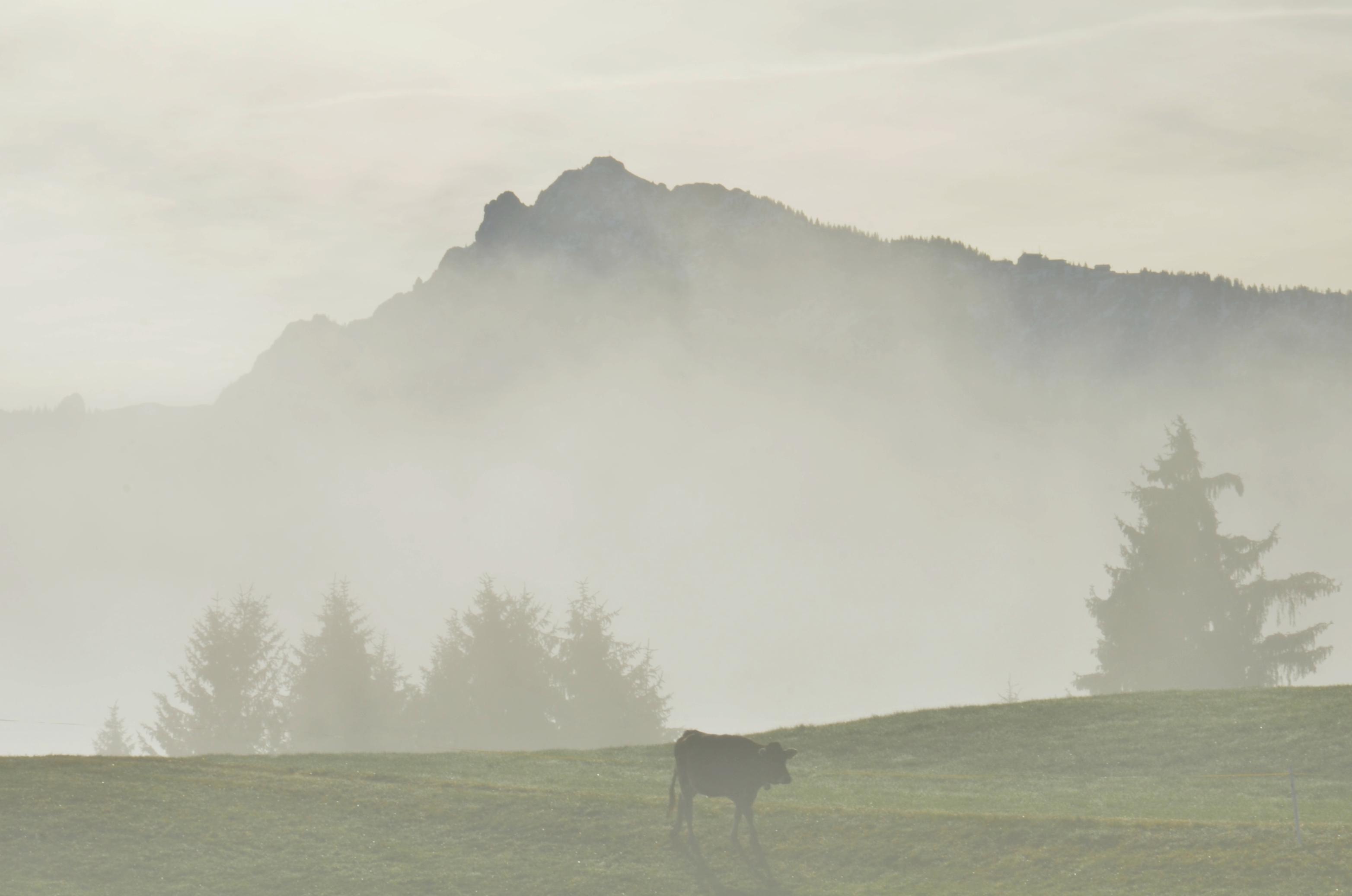 H0188 Spaziergang im Nebel Rieden.jpg