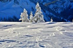 W0348 Spuren des Winters.jpg