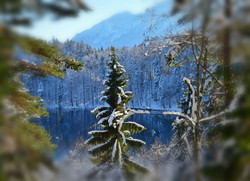 G0079 Wintermärchen am Alatsee