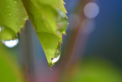 M0015 Sommerregen