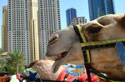 Dubai (35).jpg