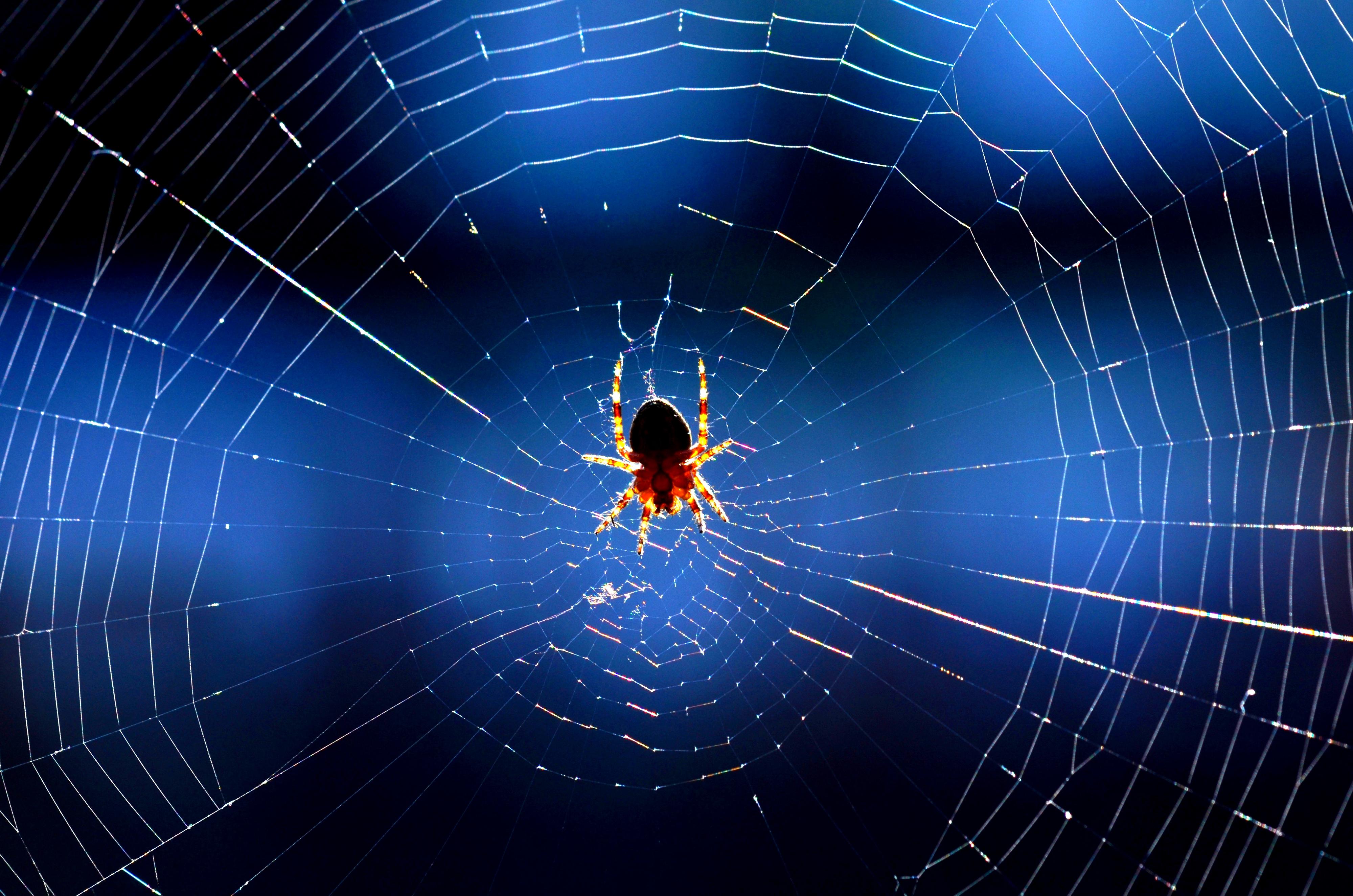 T0037 Spinnennetz.jpg