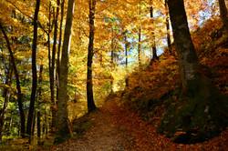 H0175 Herbstwald.jpg
