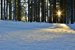 W0268 Sonnenstrahlen im Winterwald.jpg