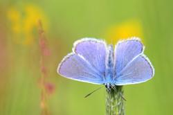 T0027 blauer Schmetterling.jpg