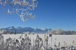 G0245 Frostmorgen am Bannwaldsee.jpg