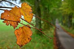 H0042 Herbstallee .jpg