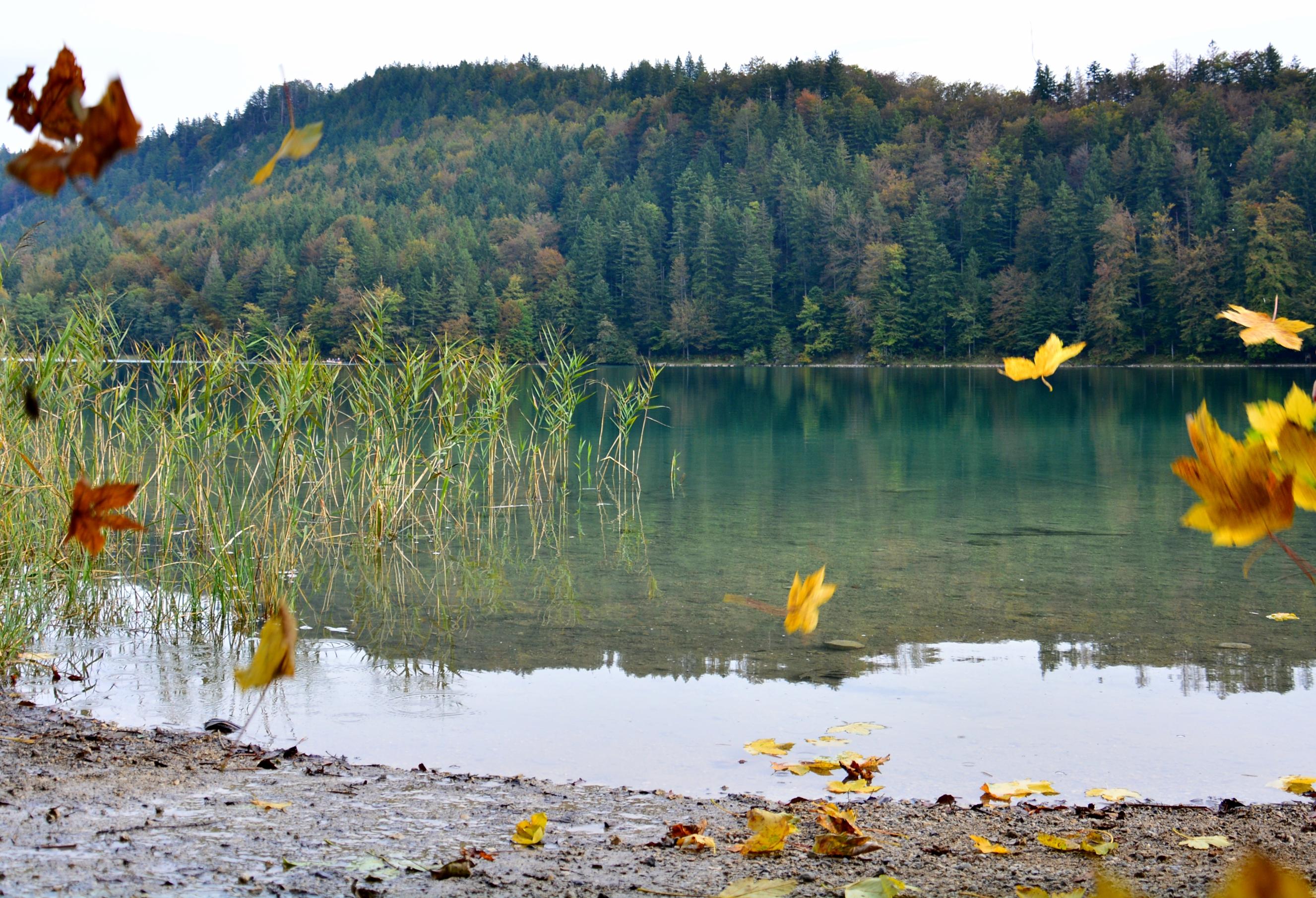 G0324_Herbstblätter_am_Alatsee.jpg