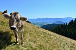 A0105_Wanderung_zur_Alpspitz_Blick_Füssener_Berge.jpg