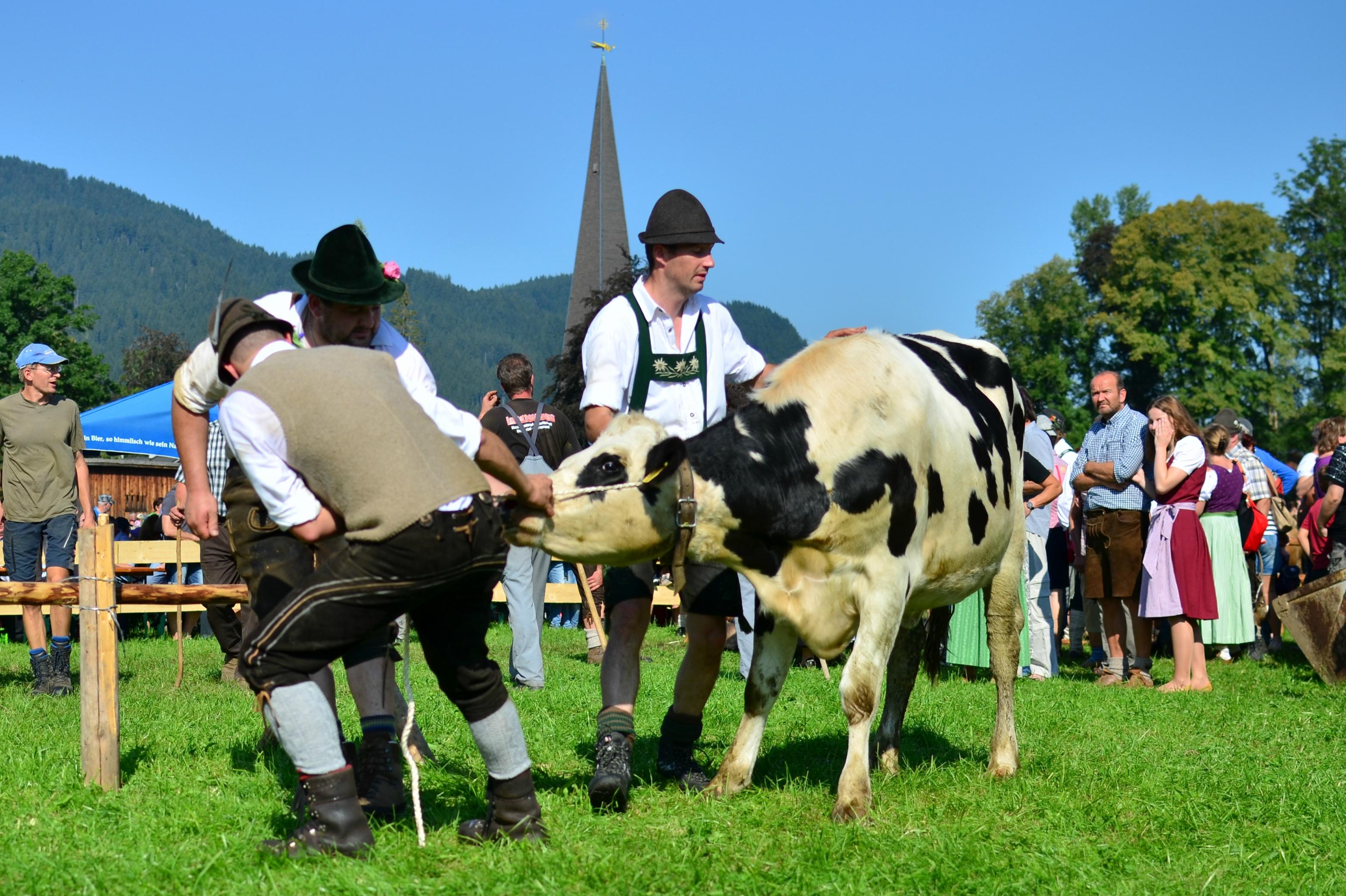 C0005 Hirten bei der Arbeit Viehscheid Pfronten 2016.jpg