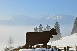 A0146 Kuh bei Schlossbergalm.jpg