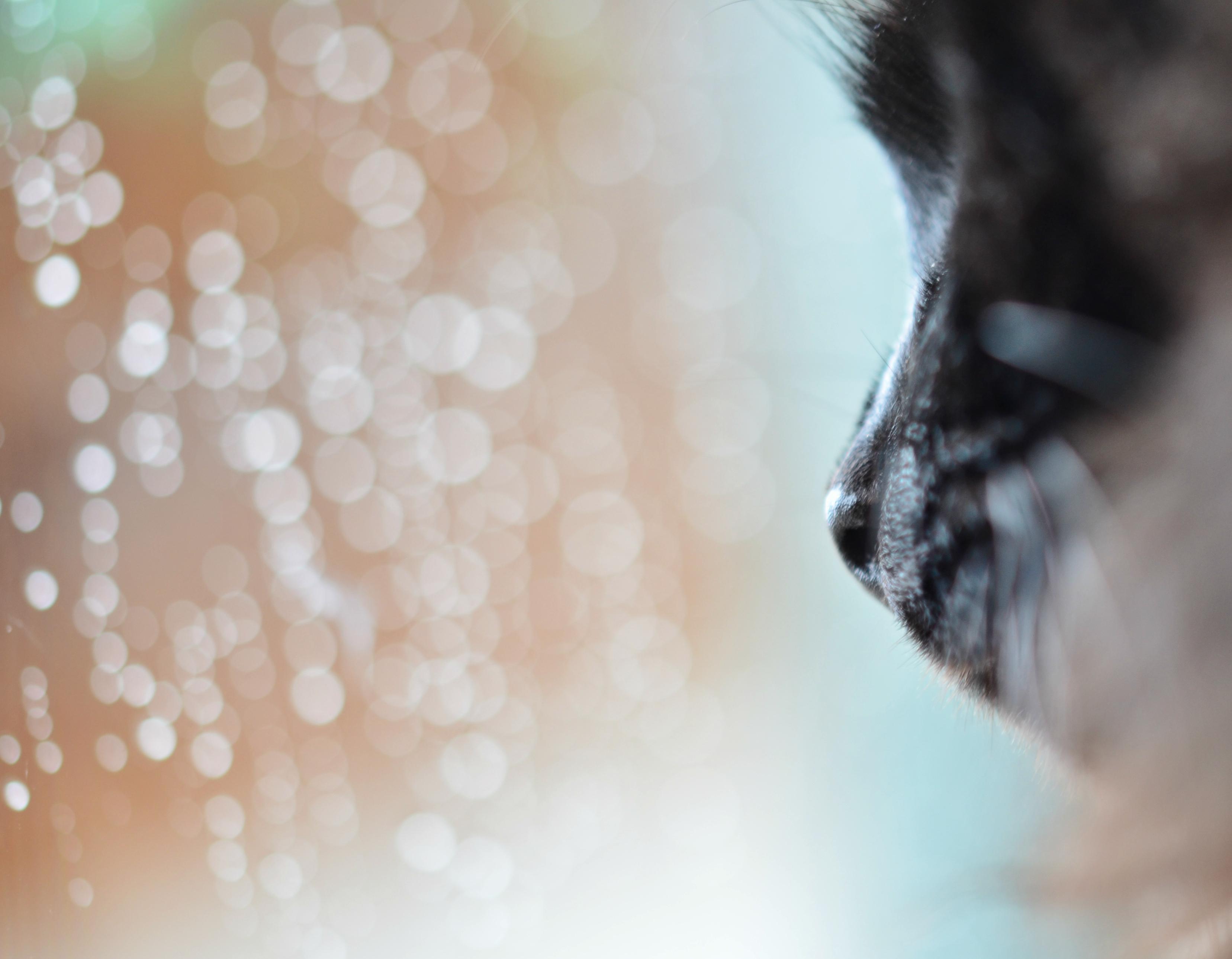 O0089 Raindrops