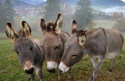 O0012 Eselgruppe Pfr.-Meilingen