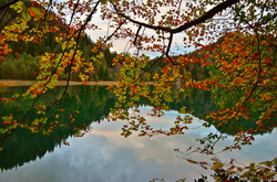 G0084 Alatsee Herbstzweige