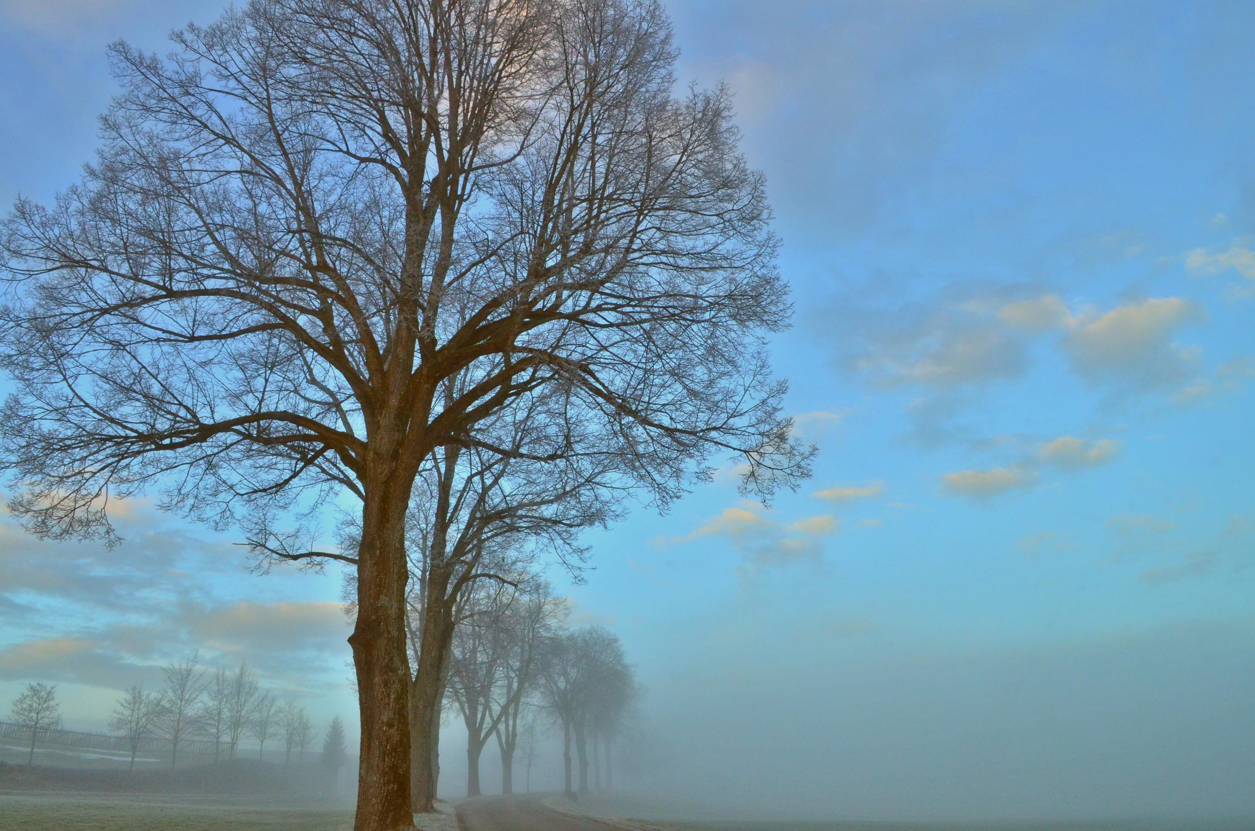 H0006 Nebelspiel