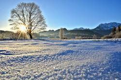 W0360 Wintermorgen im Berger Moos.jpg