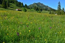 A0155_Bergwiese_bei_der_Alpe_Bärenmoos_Pfronten.jpg