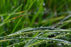M0124 Regentropfen im Gras.jpg