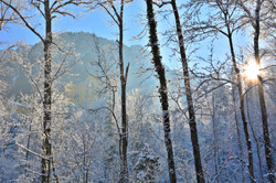 W0278 Winterwald bei Hohenschwangau.jpg