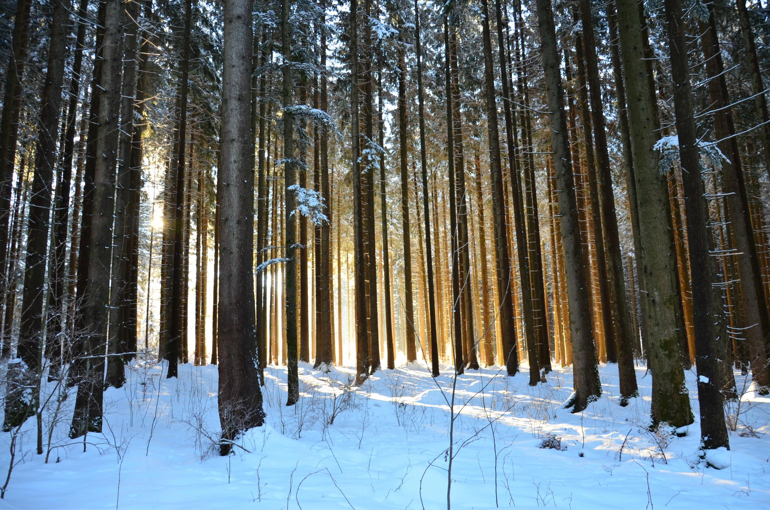 W0128 Winterwald.jpg