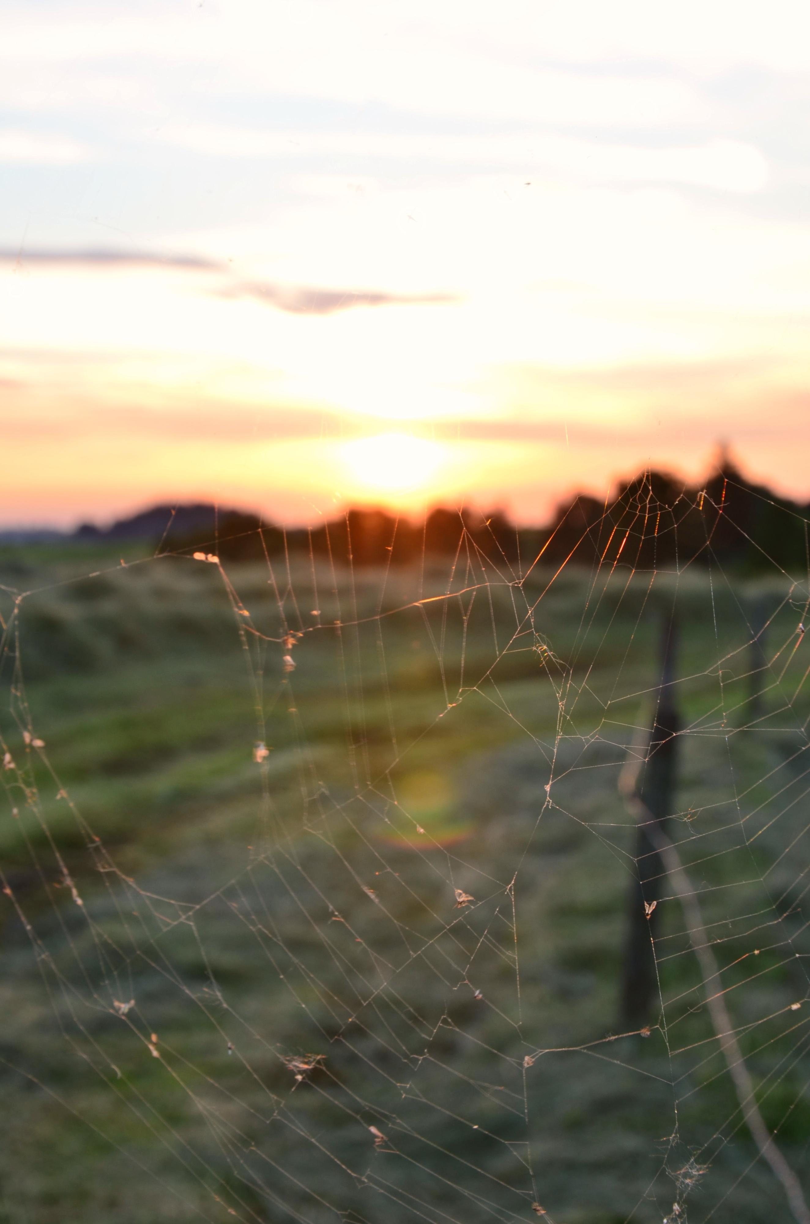 S0022 Abendsonne im Spinnennetz.jpg