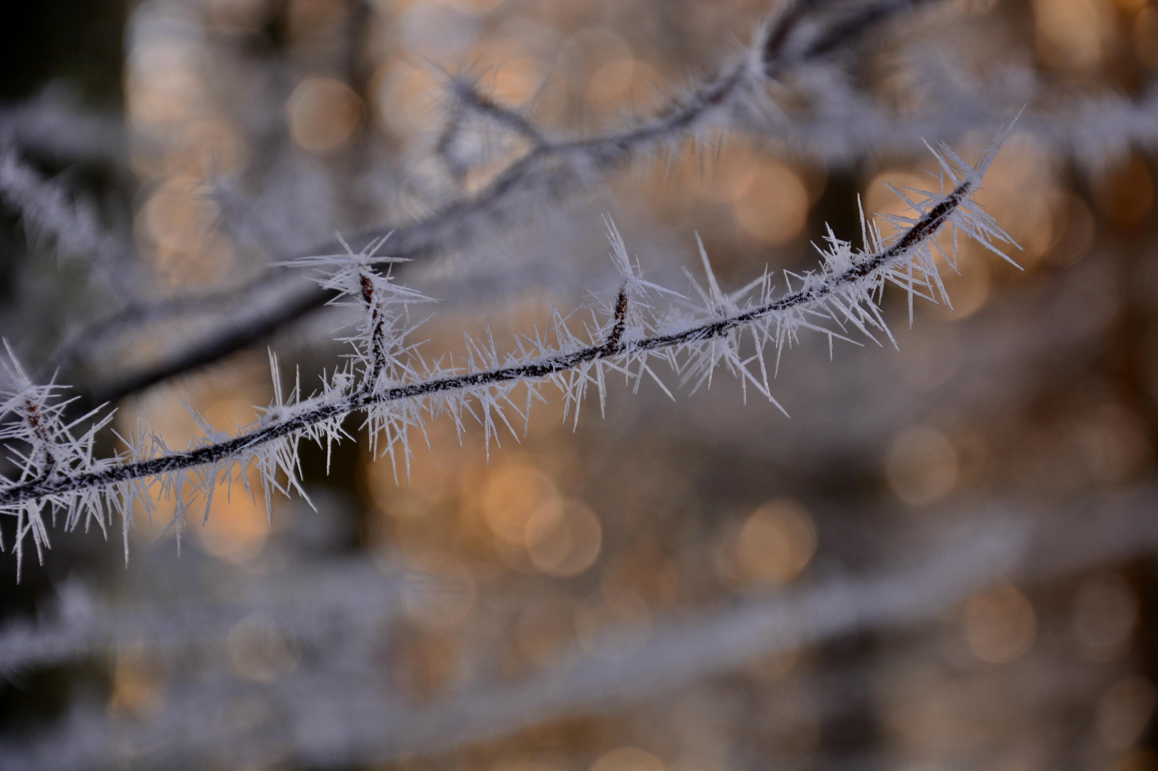 W0281_Winterzauberwald_Frostschönheiten.jpg