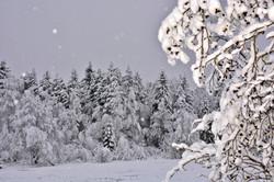 W0336 Schnee im Berger Moos.jpg