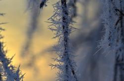 M0027 Eiskristall-Zweige