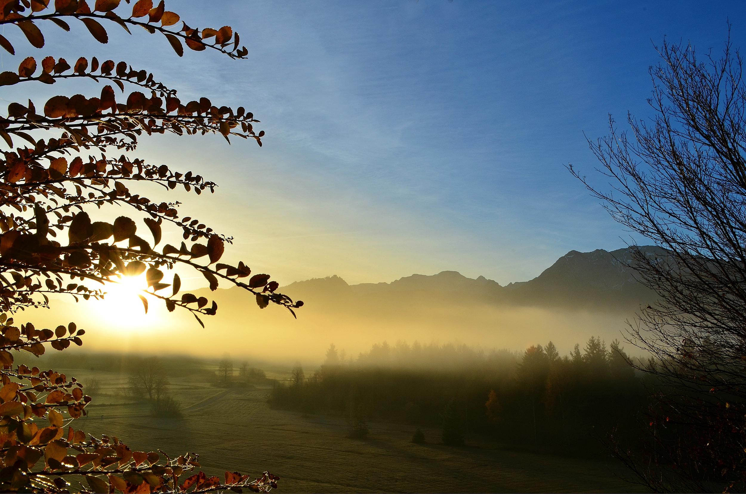 H0051 Nebelmorgen Geigerhalde.jpg