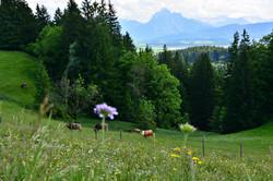 A0194 Blumenwiese Beichelstein.jpg