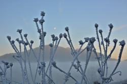 W0240 Frostblumen in Pfronten-Meilingen.jpg