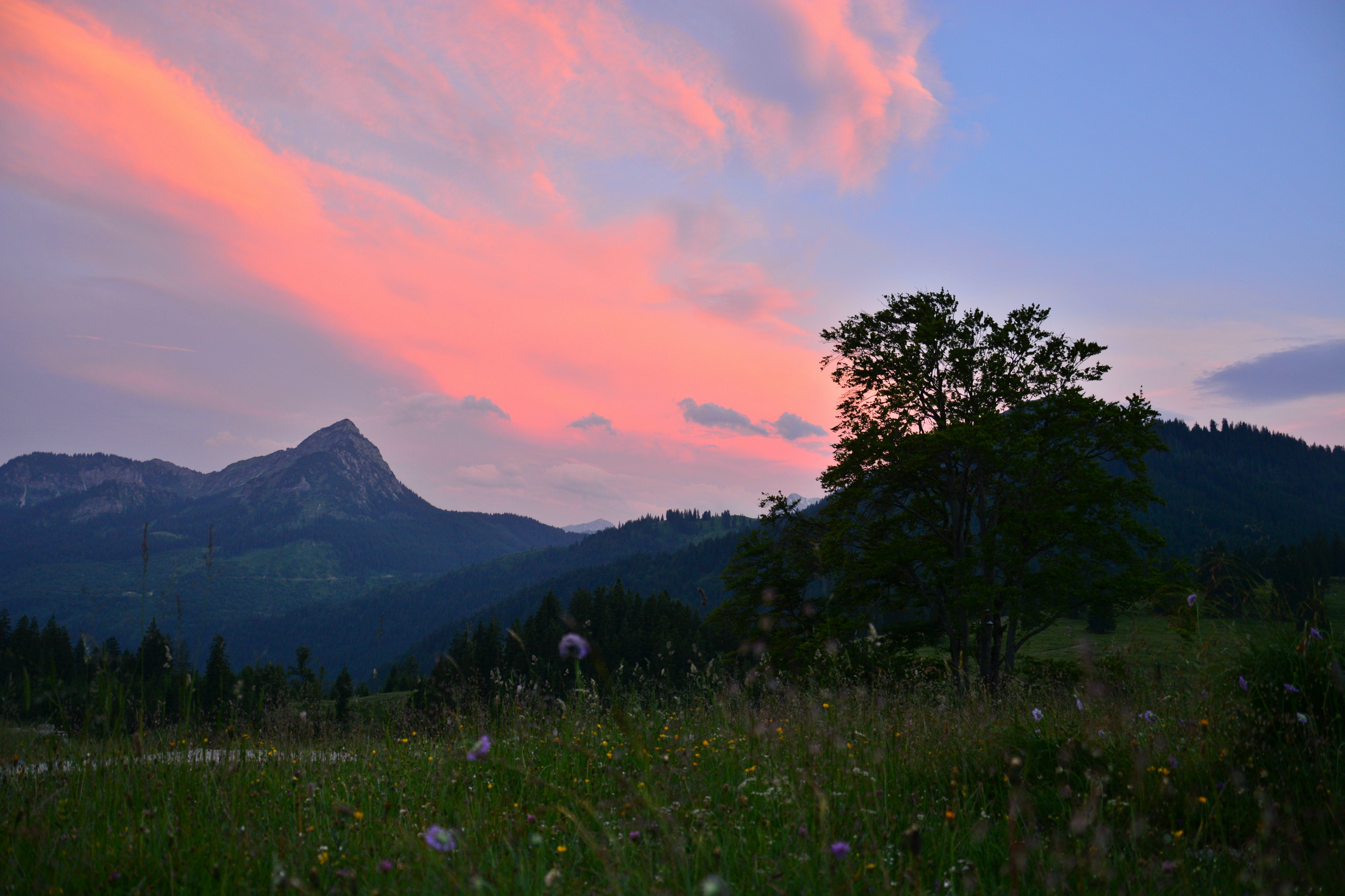 A0222_Abendrot_auf_der_Alpe_Bärenmoos_Pfronten.jpg