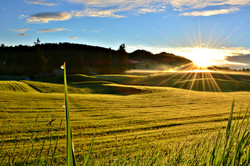 F0107 Morgentau im Sonnenaufgang Eisenberg.jpg