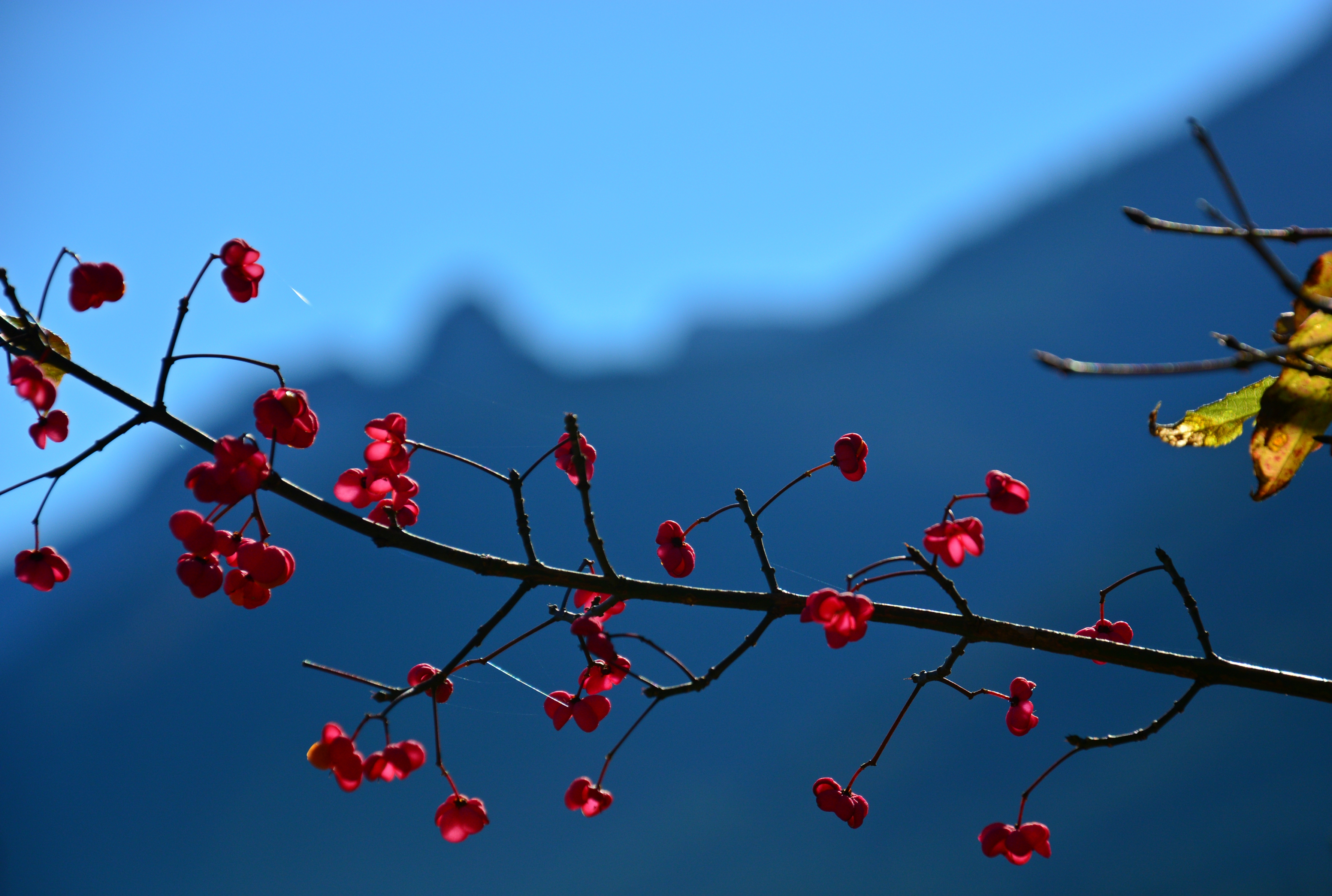 H0147 Herbstzauber vor der Bergkette.jpg