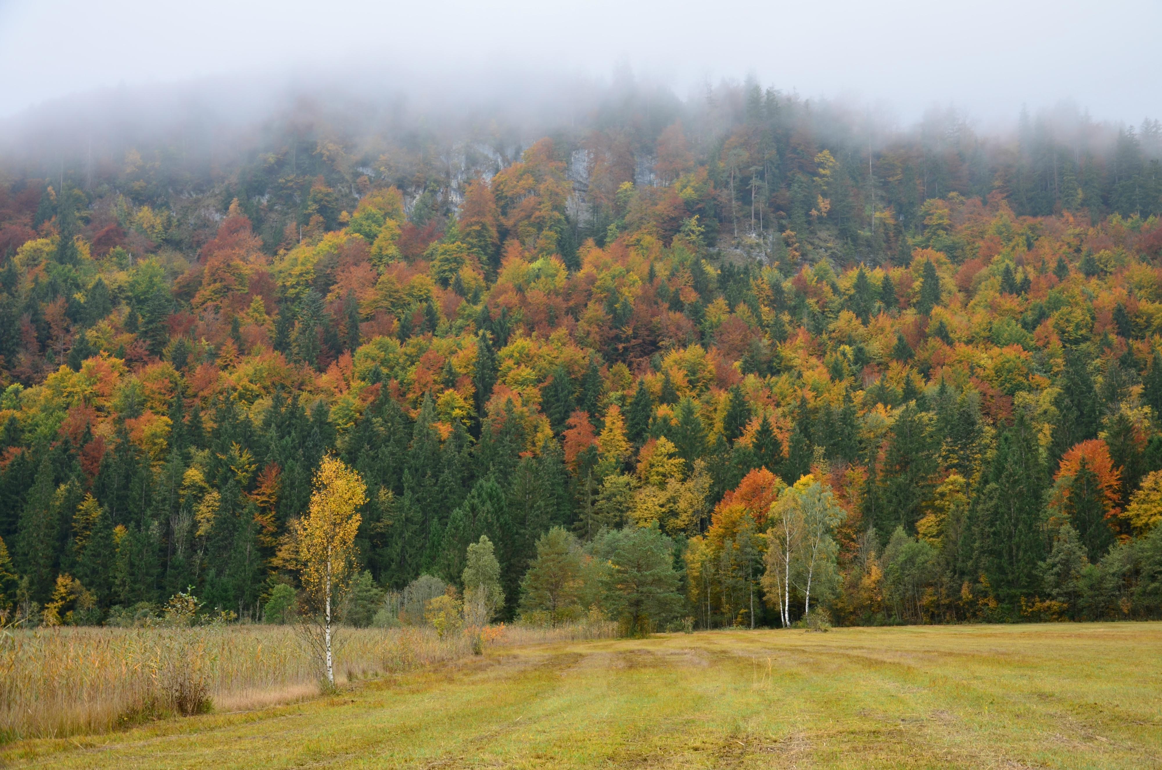 G0212 Herbstwald am Schwansee.jpg