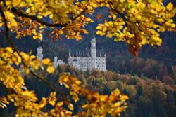 H0159 Schloss Neuschwanstein im Herbstlaub.jpg